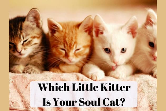 Match with your perfect soul cat